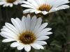 Web Blossom