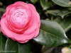 small-flower